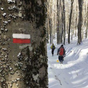 immagine faggeta Livata neve albero con segno di sentiero bianco e rosso