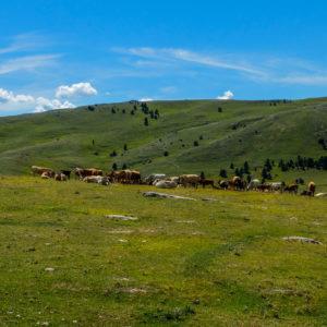 ©Luigi Lenti Ente Parco Nazionale del Gran Sasso e Monti della Laga