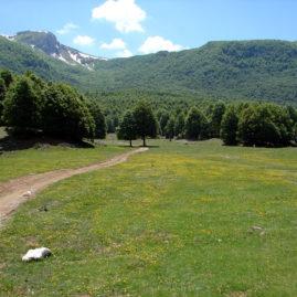 Campo Ceraso Parco dei Monti Simbruini