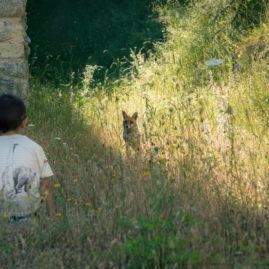 Incontri innocenti nel Parco Nazionale del Gran Sasso e Monti della Laga