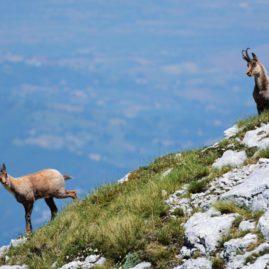 Parco Nazionale del Gran Sasso e Monti della Laga 3