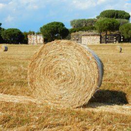Parco_Appia_Antica