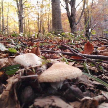 funghi foliage CNP