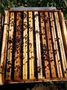 giornata mondiale delle api 2